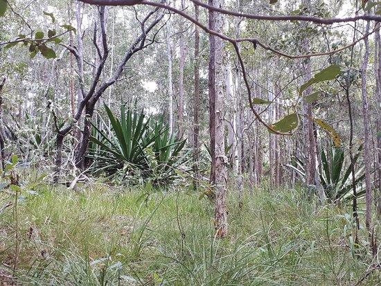 Mooloolah Valley, Australie : Stunning flora and fauna