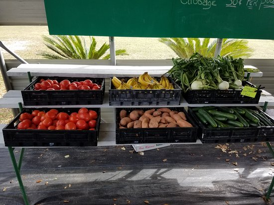 Brooksville, FL: Fresh Veggies
