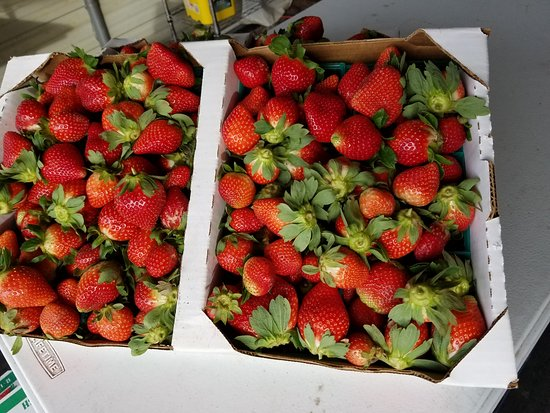 Brooksville, FL: Great strawberries