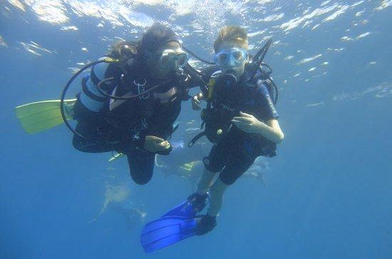 Tenerife Descubre la experiencia de...