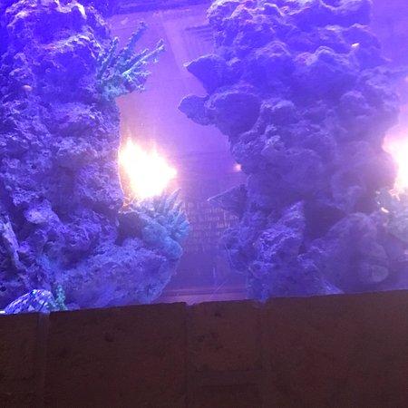 FishBones: photo2.jpg
