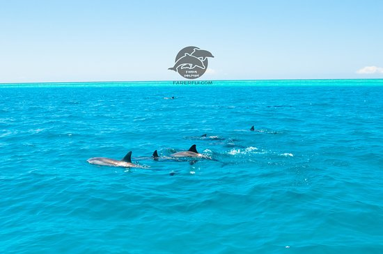 Nadi, Fiyi: lovely spinner dolphin and beautiful reef