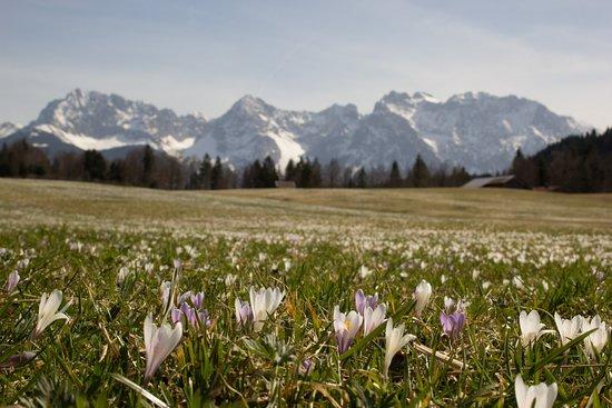 Frühling in Klais