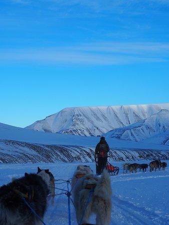 Svalbard Husky: OI000011_large.jpg