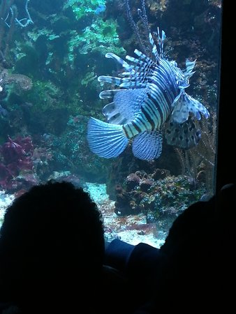 Aquarium tropical de la porte doree - Aquarium tropical de la porte doree ...