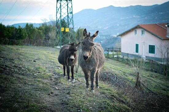 Serra Ricco Photo