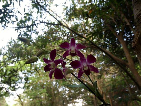 Belle orchidée dans les jardins de l\'hôtel - Picture of Camellia ...