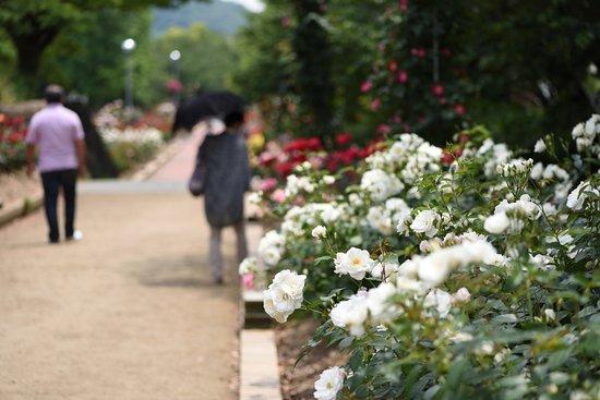 Takamatsu, Japan: 広いバラ園です