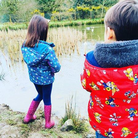 Poltarrow Farm: The duck pond