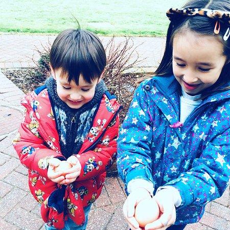 Poltarrow Farm: The rewards for collecting the eggs