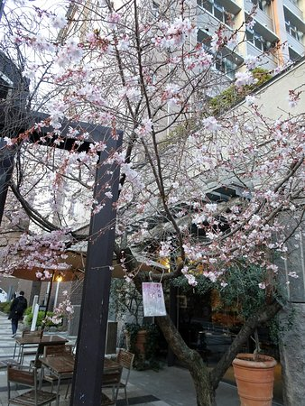 Oike Sakura