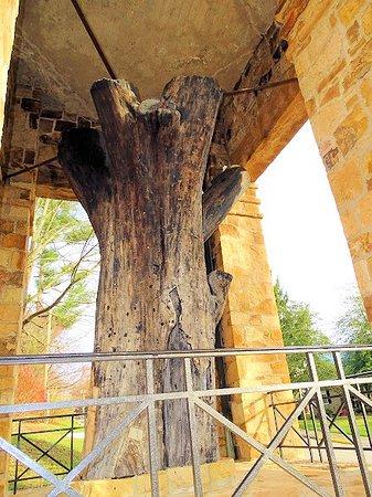 Constitution Elm: trunk of the elm