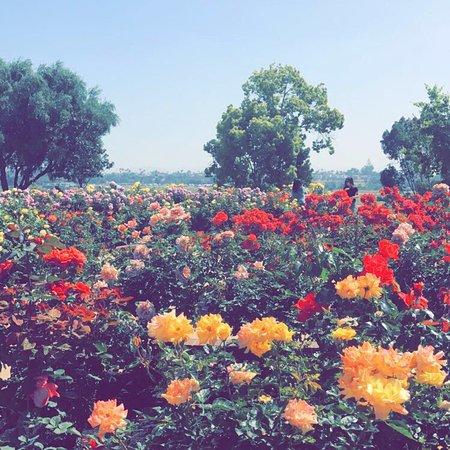 Balboa Park : photo0.jpg
