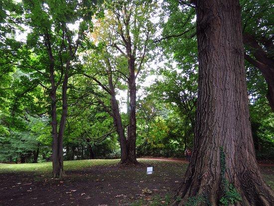 Sapporo, Japonya: 針葉樹林