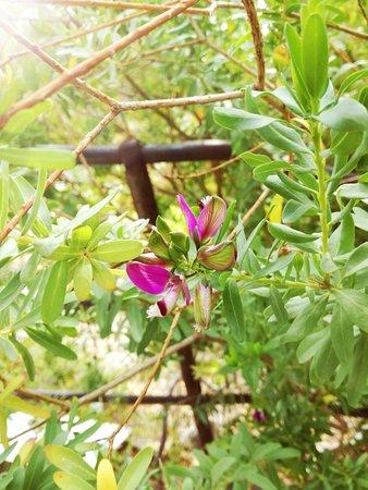 Giardini Botanici Hanbury : Particolare