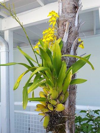 Orchid Key Inn: 20180320_103718_001_large.jpg