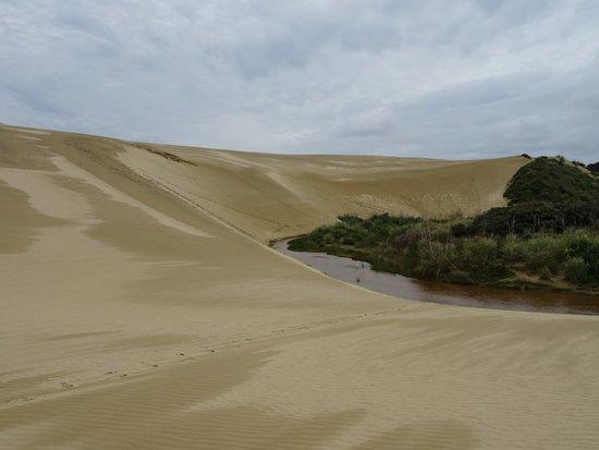 Pukenui, New Zealand: Au départ des dunes