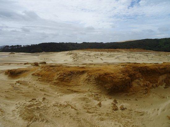 Pukenui, New Zealand: Dans les dunes