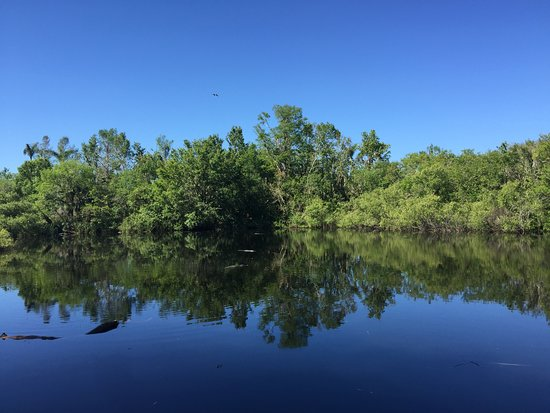 """Copeland, FL: Pond filled with gators behind the """"Hilton"""""""