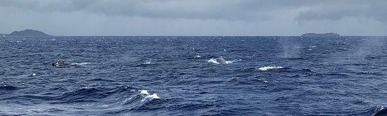 Pacific Whale Foundation Bild