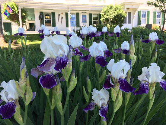 Marshfield, VT: We have a fine collection of irises and other perennials.