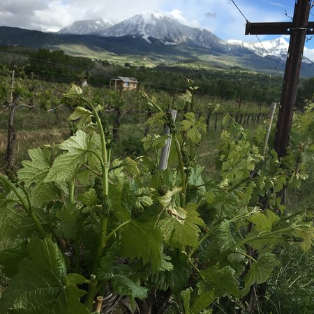 Paonia, CO: View of the SkyHawk Vineyard from Root and Vine Market