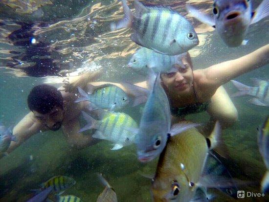 Ilhabela, SP: Mergulho