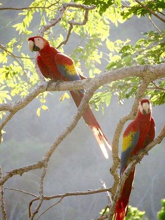 Punta Islita, Costa Rica: Easy to take photos