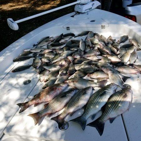 Fishing Addiction Guide Service Lake Livingston: photo0.jpg