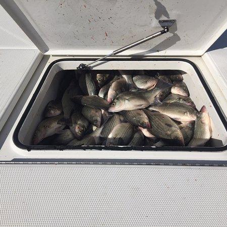 Fishing Addiction Guide Service Lake Livingston: photo1.jpg