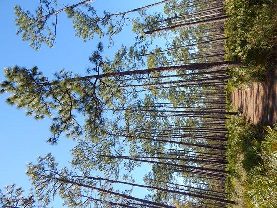 Olustee, FL: trail view 1