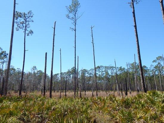 Olustee, FL: trail view 2