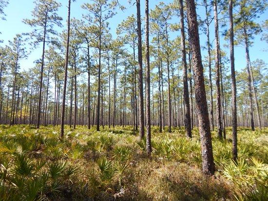 Olustee, FL: trail view 3