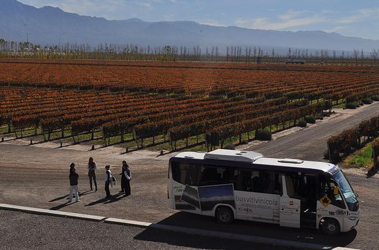 Mendoza Hop-On Hop-Off Wine Tour