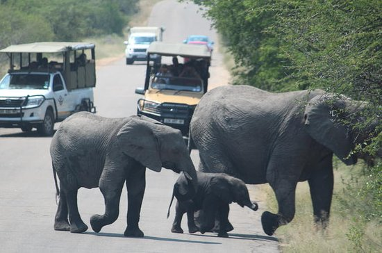 Kruger National Park 2 Days 1 Night...