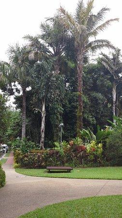 Cairns Region, Australia: Another view of Cairns Botanical Gardens