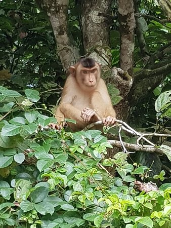Borneo Nature Lodge: 20180313_074145_large.jpg