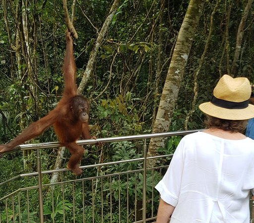 Borneo Nature Lodge: 20180311_214311_large.jpg