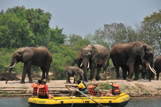 Safari Par Excellence
