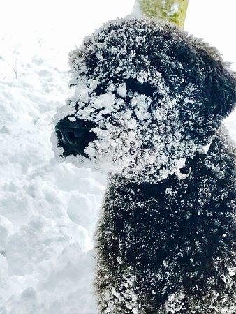 Otterburn, UK: Snowface Bertie