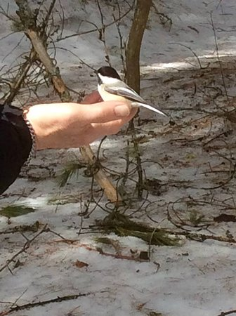 Couples Resort: Algonquin Bird feeding