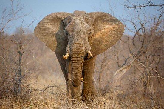 Timbavati Private Nature Reserve, Republika Południowej Afryki: Motswari Private Game Reserve | Newmark