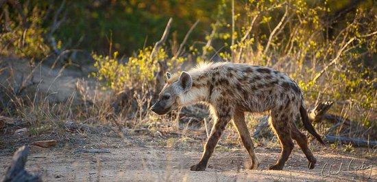 Timbavati Private Nature Reserve, Sudáfrica: Motswari Private Game Reserve | Newmark