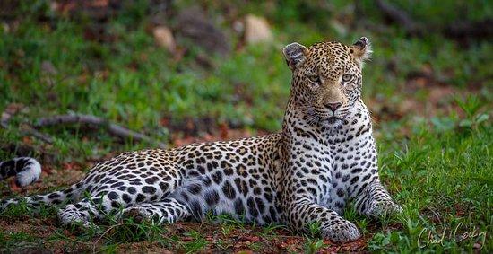 Timbavati Private Nature Reserve 이미지