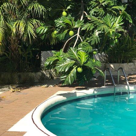 Lower Carlton, Barbados: photo2.jpg