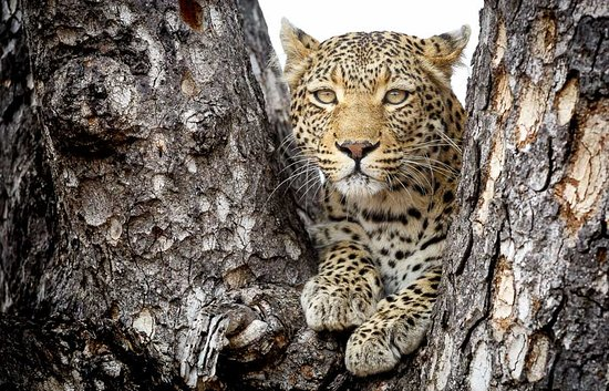 Timbavati Private Nature Reserve, South Africa: Motswari Private Game Reserve | Newmark