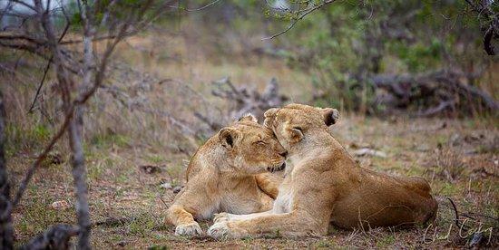 Частный заповедник Тимбавати, Южная Африка: Motswari Private Game Reserve | Newmark