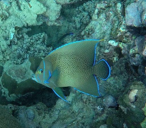Bel Ombre, Seychelles: Hausriff