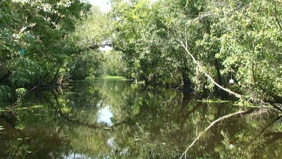 DeLand, FL: Old historic cypress logging canal