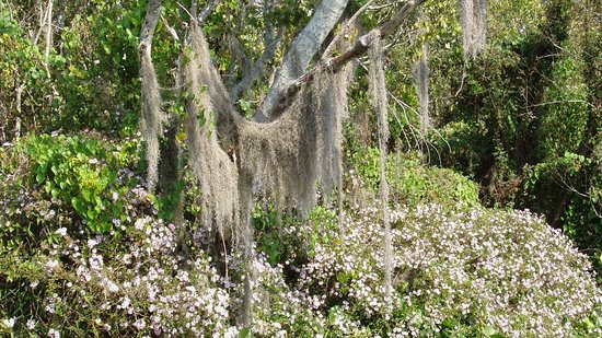 St. Johns River Heritage River Tours: flora seen along the way